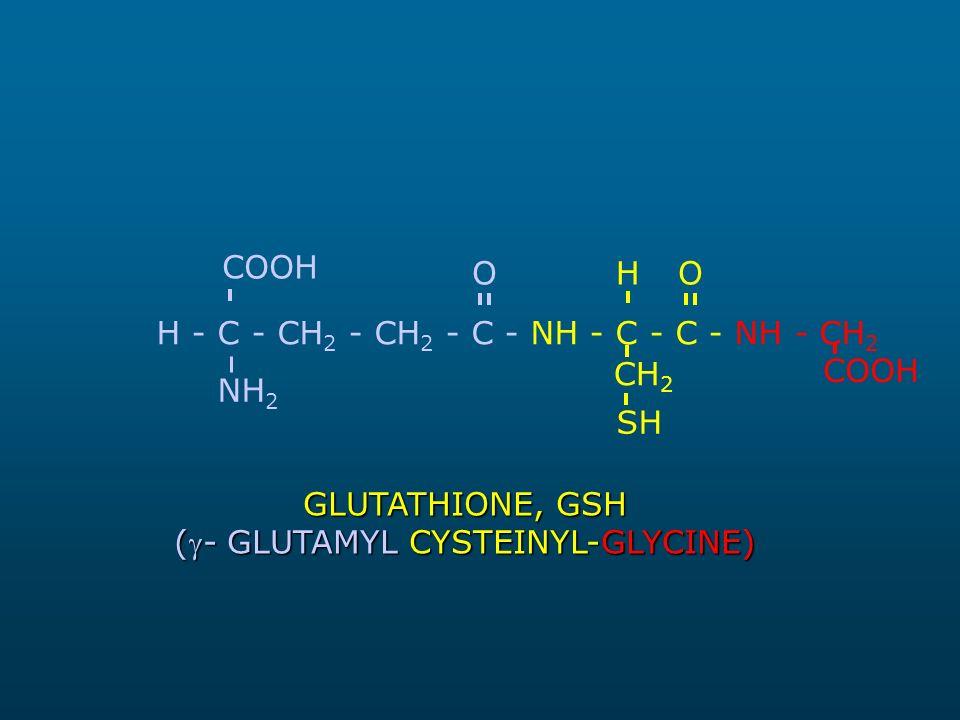 (- GLUTAMYL CYSTEINYL-GLYCINE)