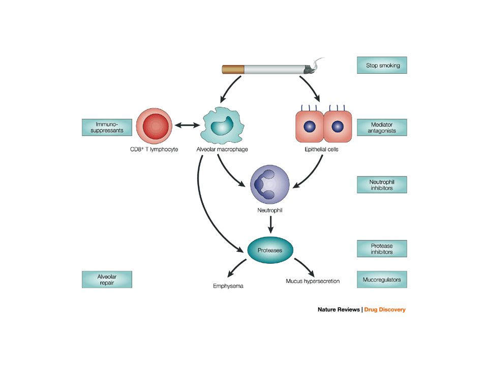 Targets for COPD therapy that are based on current understanding of the inflammatory mechanisms.