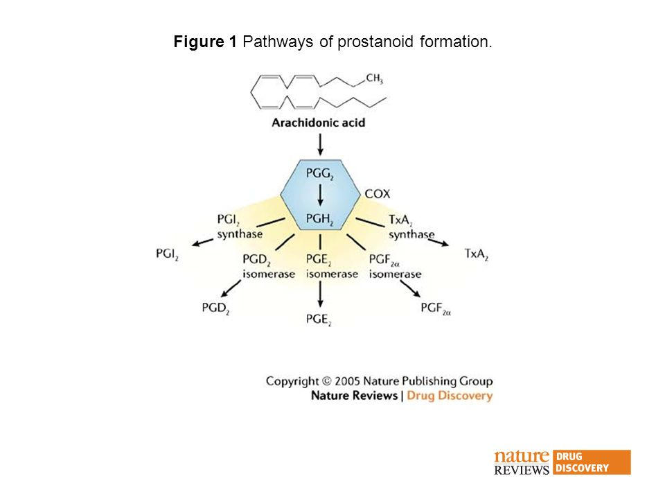 Figure 1 Pathways of prostanoid formation.