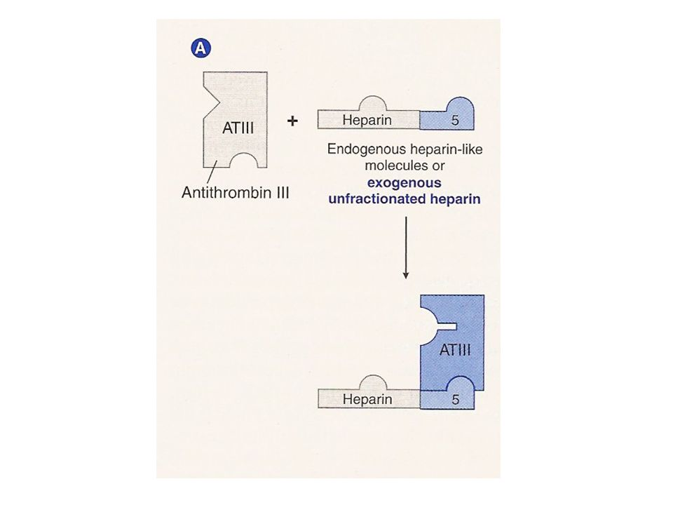 Antithrombin III action