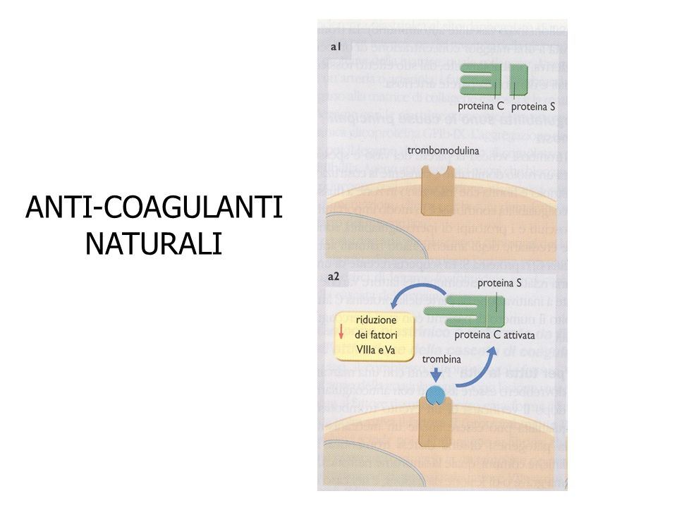 ANTI-COAGULANTI NATURALI