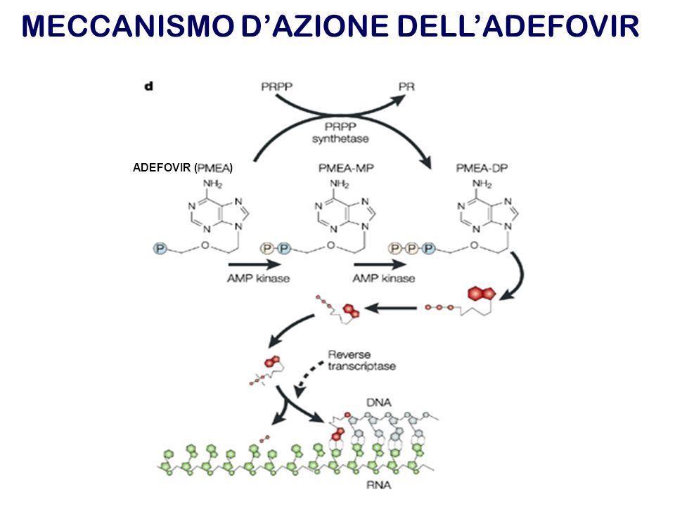MECCANISMO D'AZIONE DELL'ADEFOVIR