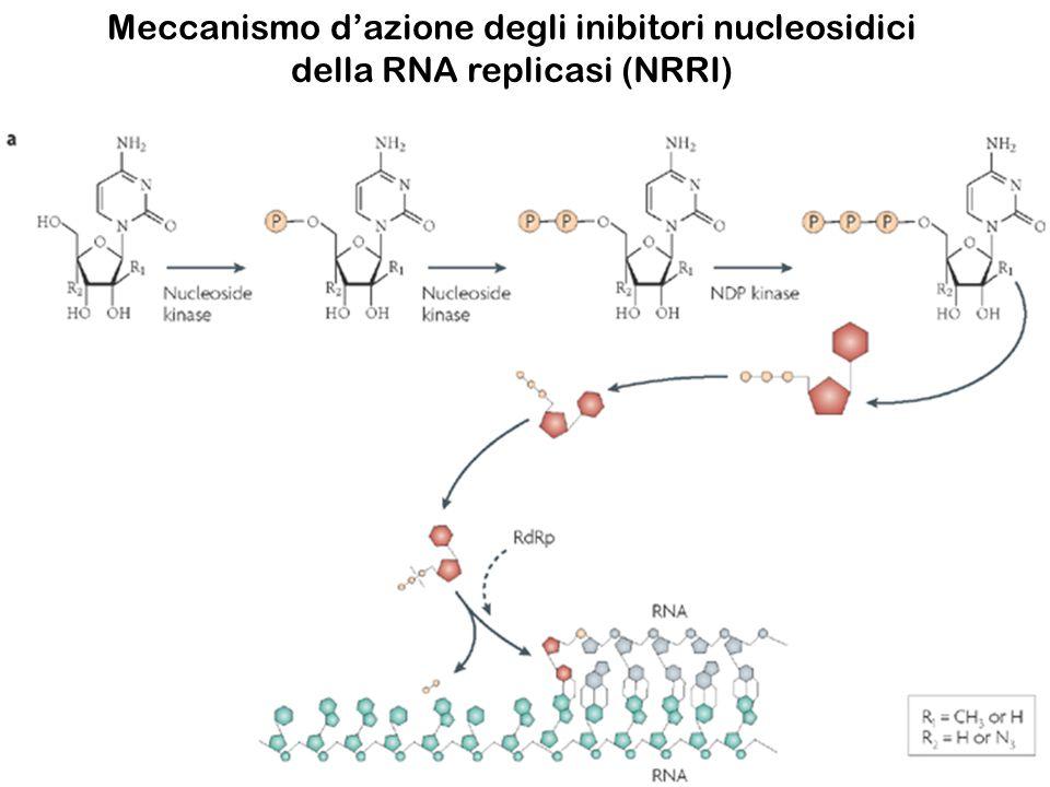 Meccanismo d'azione degli inibitori nucleosidici