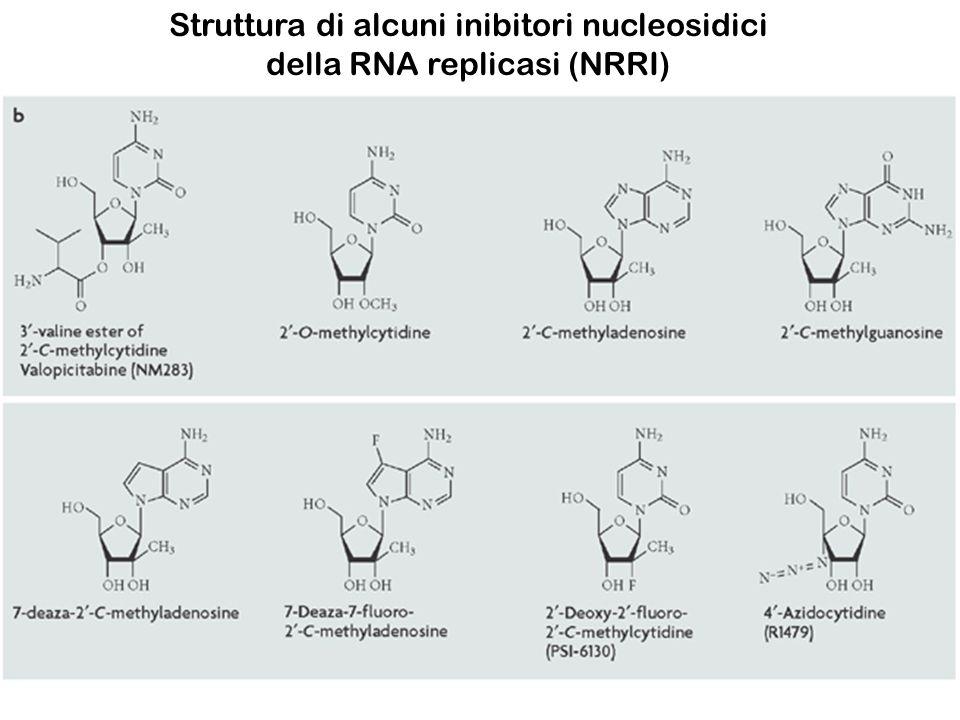 Struttura di alcuni inibitori nucleosidici della RNA replicasi (NRRI)