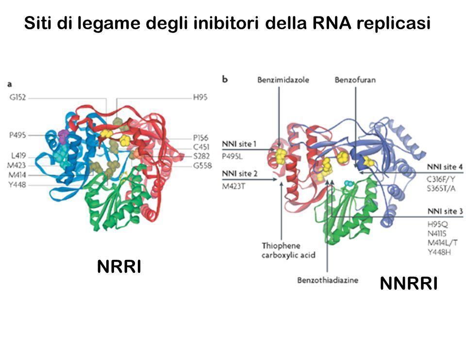 Siti di legame degli inibitori della RNA replicasi