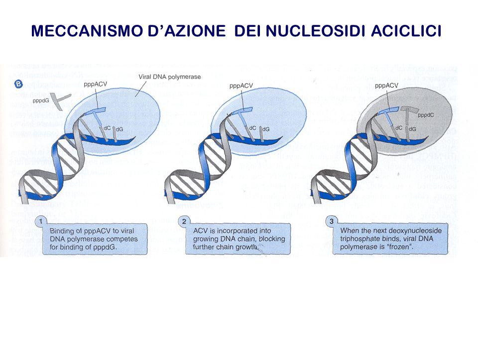 MECCANISMO D'AZIONE DELL'ACICLOVIR