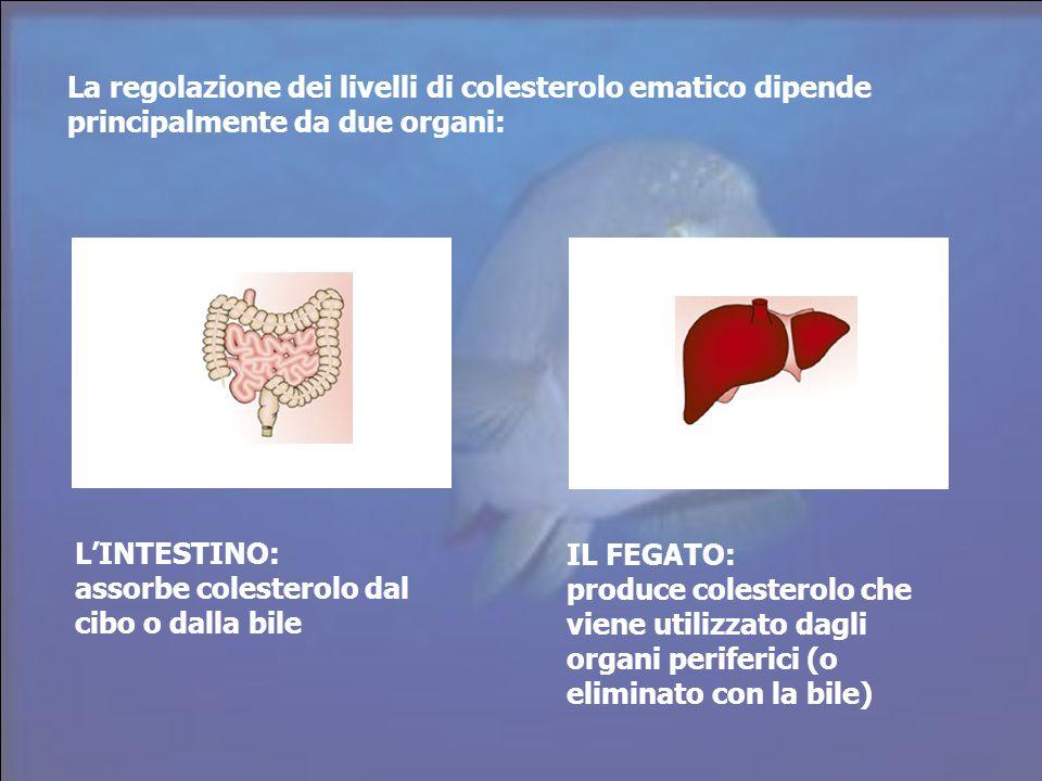 La regolazione dei livelli di colesterolo ematico dipende principalmente da due organi: