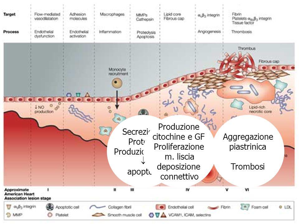 Secrezione Proteasi Produzione ROS  apoptosi Produzione