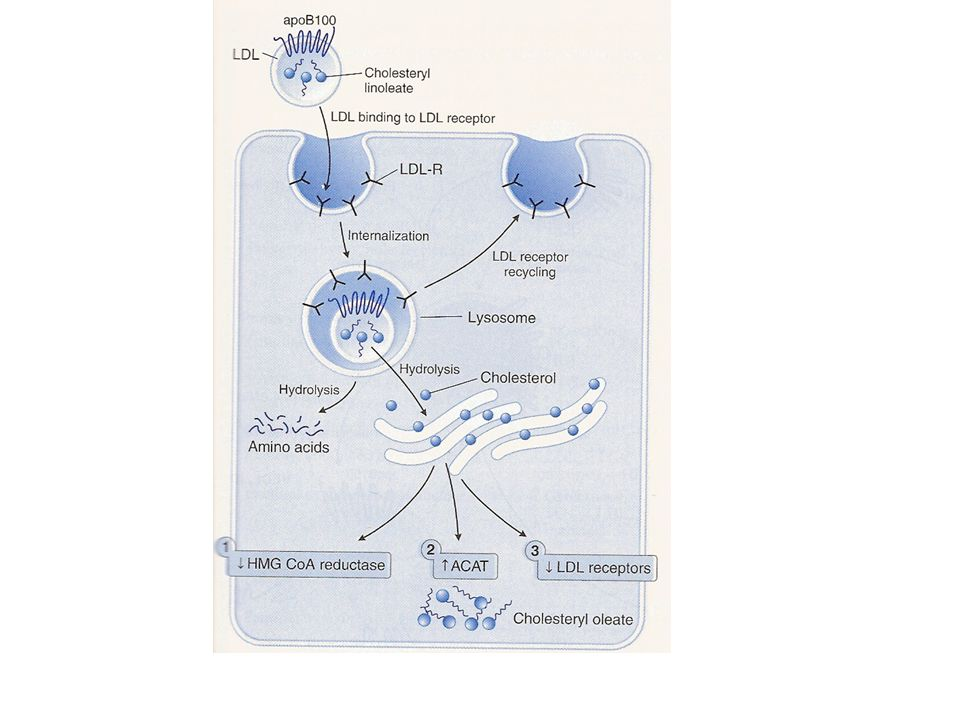 Cellular regulation of cholesterol metabolism