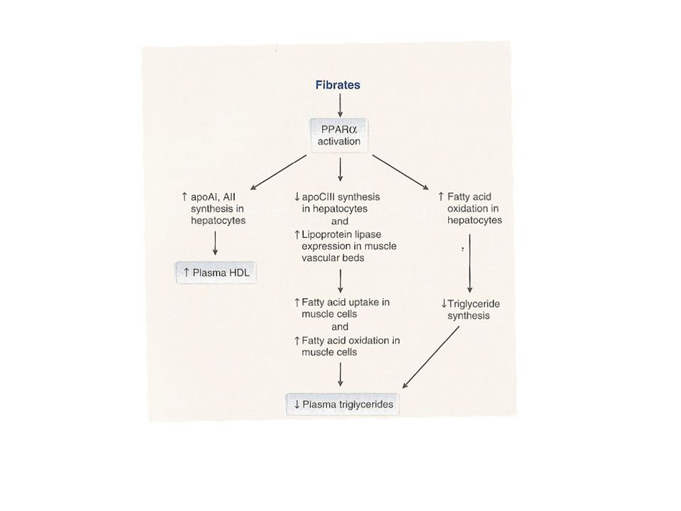 Effects of fibrates on lipid metabolism
