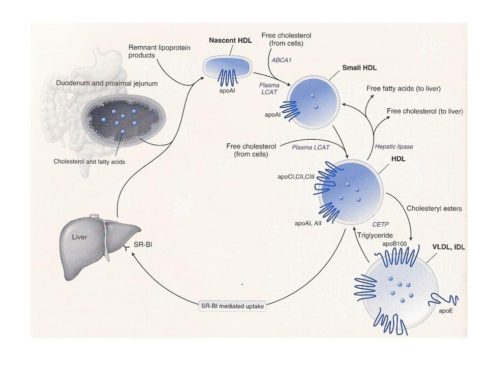 HDL metabolism.