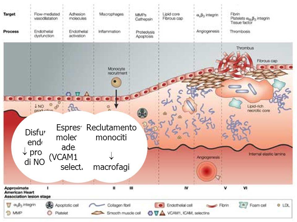 Disfunzione endoteliale produzione di NO e PGI2 Espressione