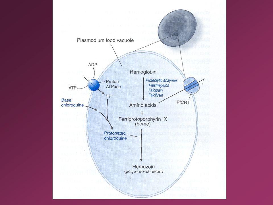 Figura 37 - 2. Meccanismi proposti per spiegare il metabolismo dell'eme nel vacuolo alimentare del plasmodio.