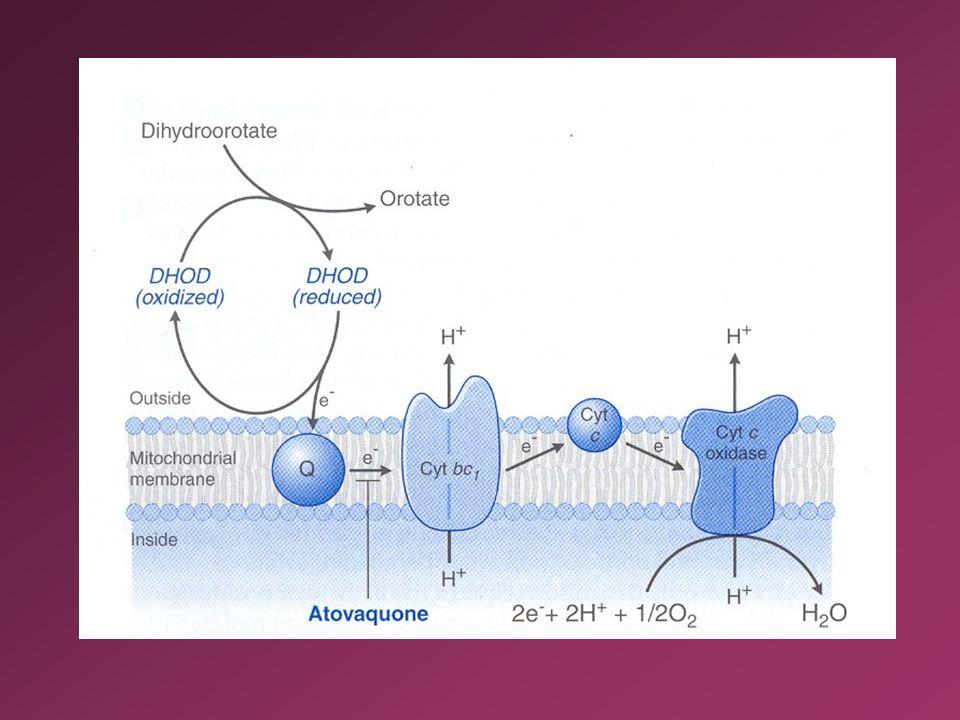 Figura 37 – 3. La catena di trasporto degli elettroni nel plasmodio della malaria.