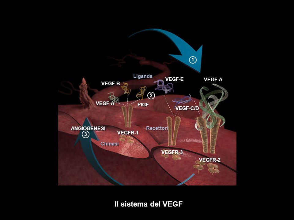 Il sistema del VEGF Ligands Recettori Chinasi 1 VEGF-E VEGF-A VEGF-B 2