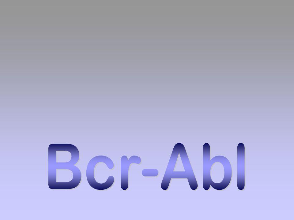 Bcr-Abl