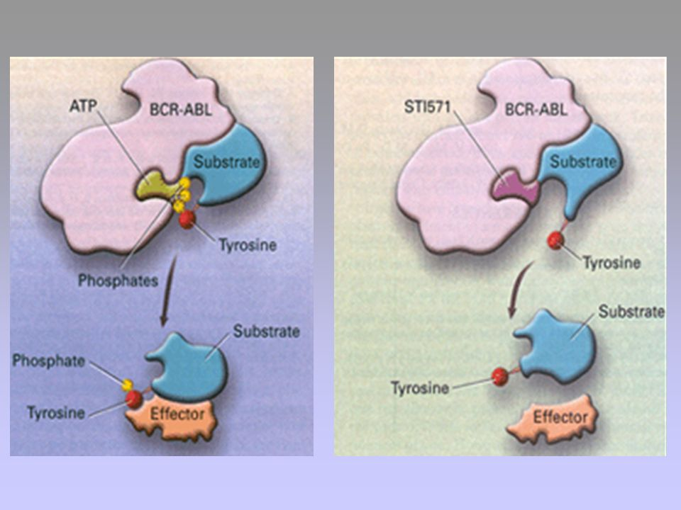 Figure 1. Schematic representation of the mechanism of action of STI571.