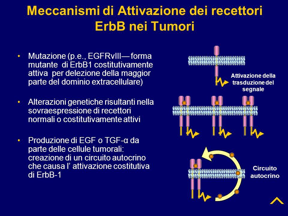 Meccanismi di Attivazione dei recettori ErbB nei Tumori