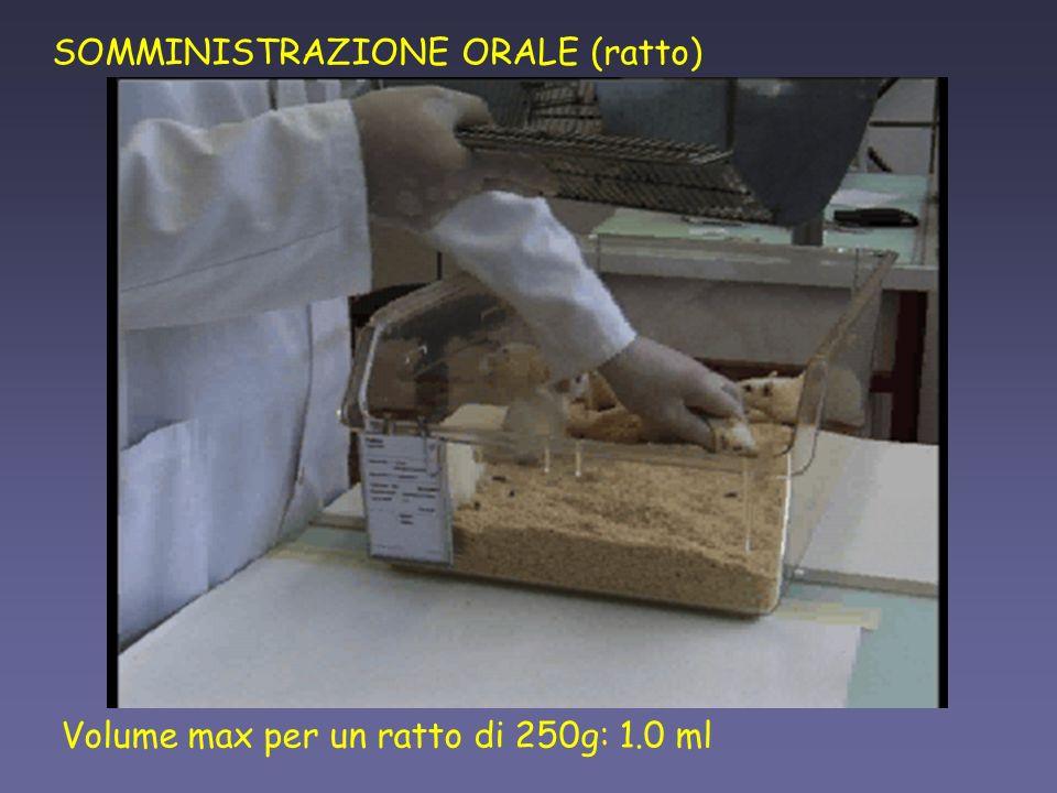 SOMMINISTRAZIONE ORALE (ratto)
