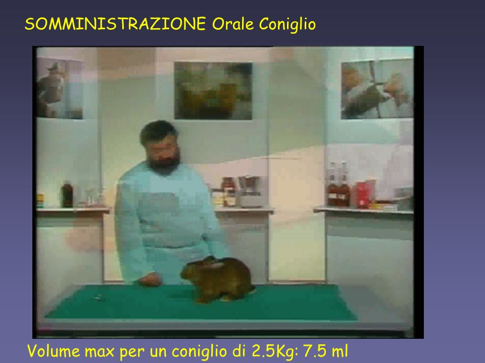 SOMMINISTRAZIONE Orale Coniglio