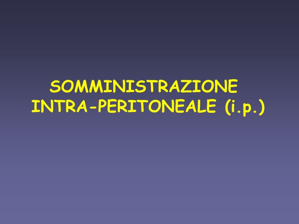 INTRA-PERITONEALE (i.p.)