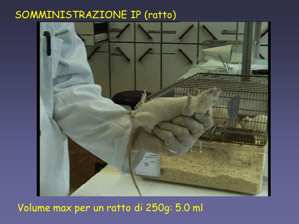 SOMMINISTRAZIONE IP (ratto)