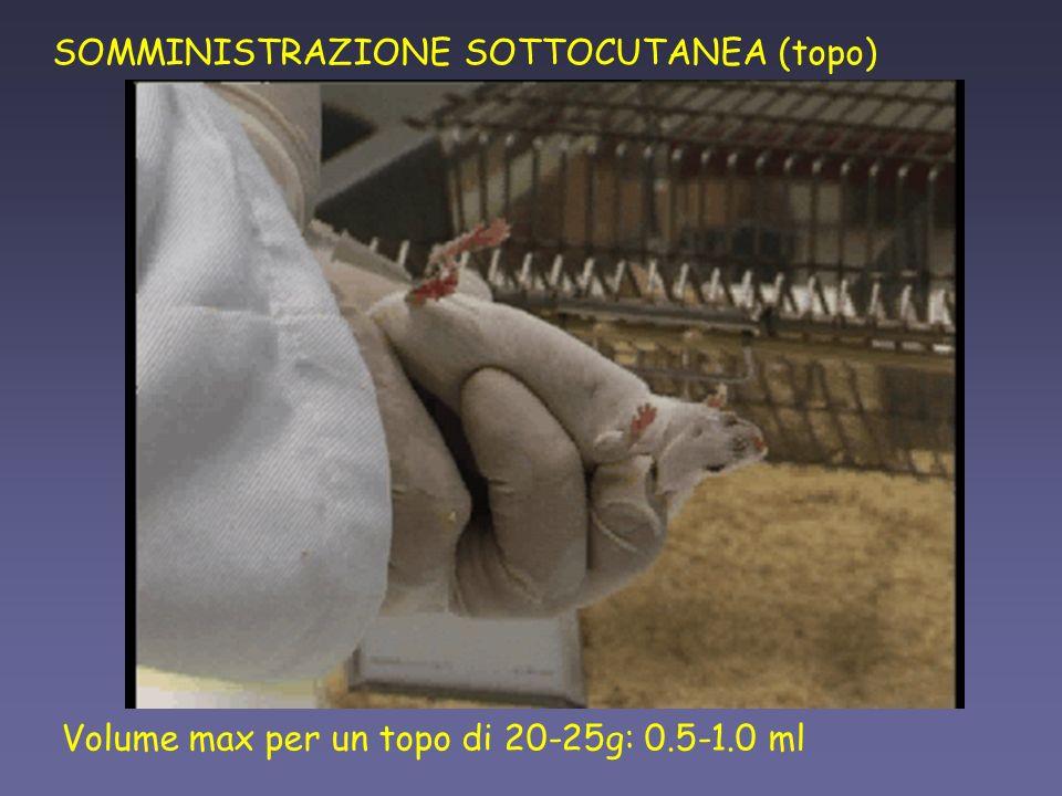 SOMMINISTRAZIONE SOTTOCUTANEA (topo)