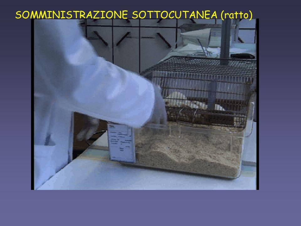 SOMMINISTRAZIONE SOTTOCUTANEA (ratto)