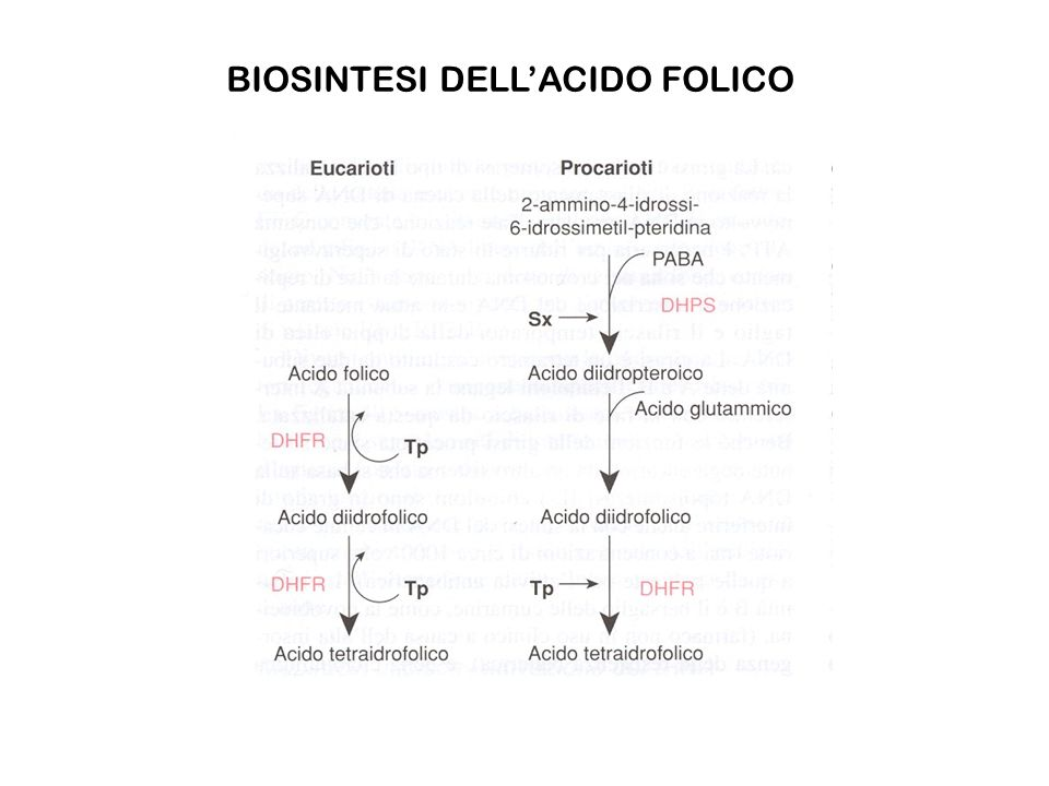 BIOSINTESI DELL'ACIDO FOLICO