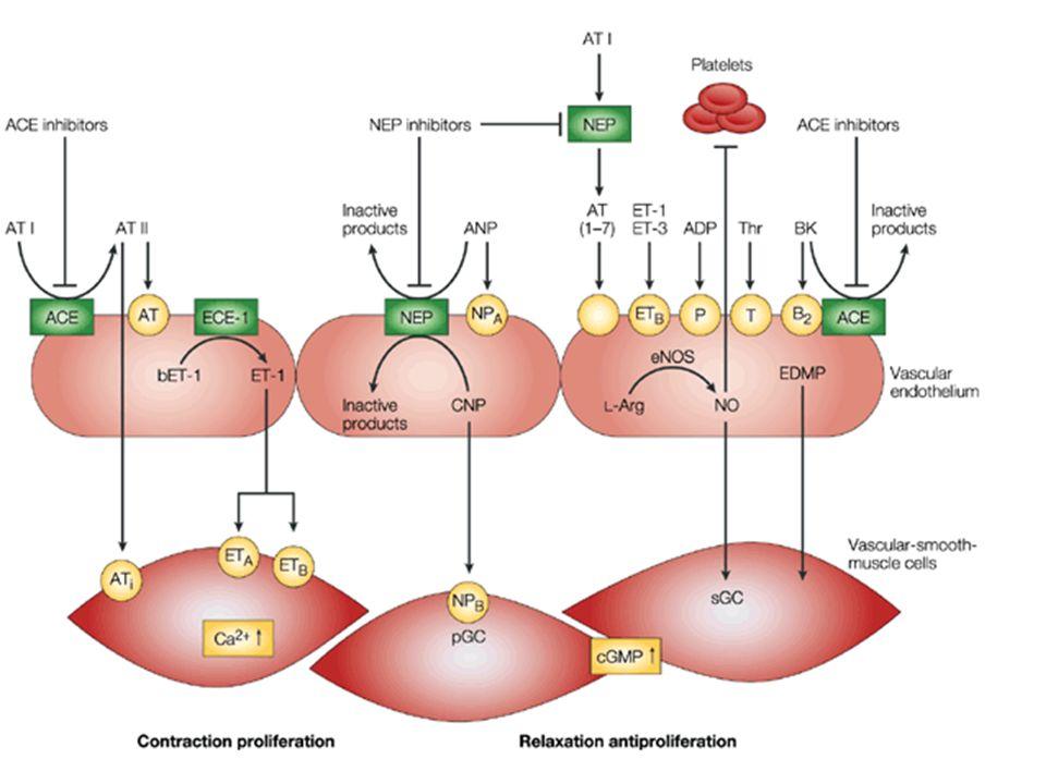 Mechanism of action of vasopeptidase inhibitors