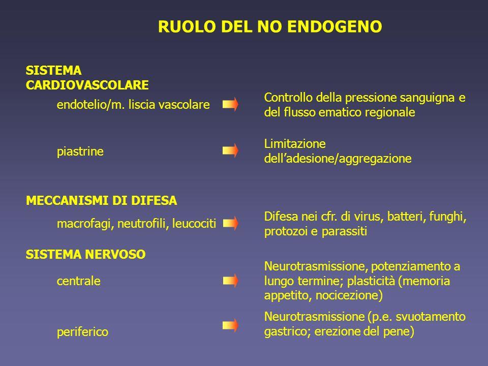 RUOLO DEL NO ENDOGENO SISTEMA CARDIOVASCOLARE