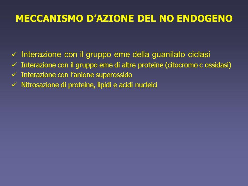 MECCANISMO D'AZIONE DEL NO ENDOGENO