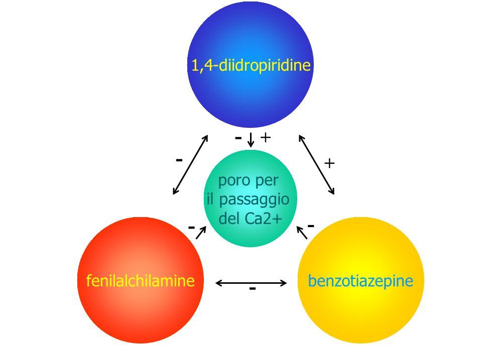 - - - + + 1,4-diidropiridine benzotiazepine fenilalchilamine poro per