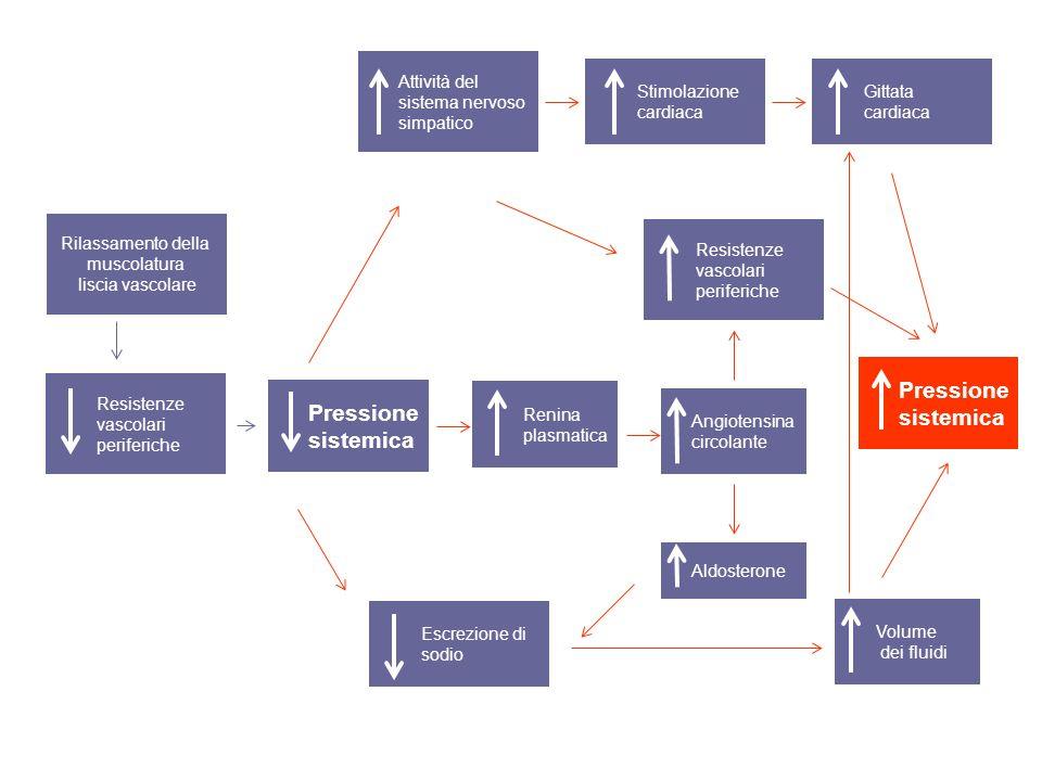 Pressione sistemica Pressione sistemica Attività del sistema nervoso