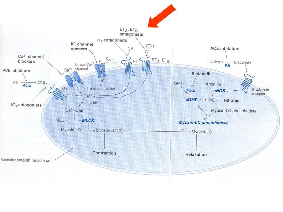 Sites of action of vasodilators