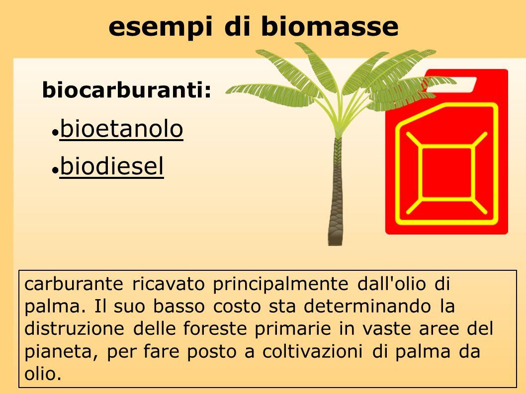 esempi di biomasse bioetanolo biodiesel biocarburanti: