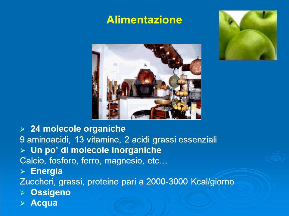 Alimentazione 24 molecole organiche