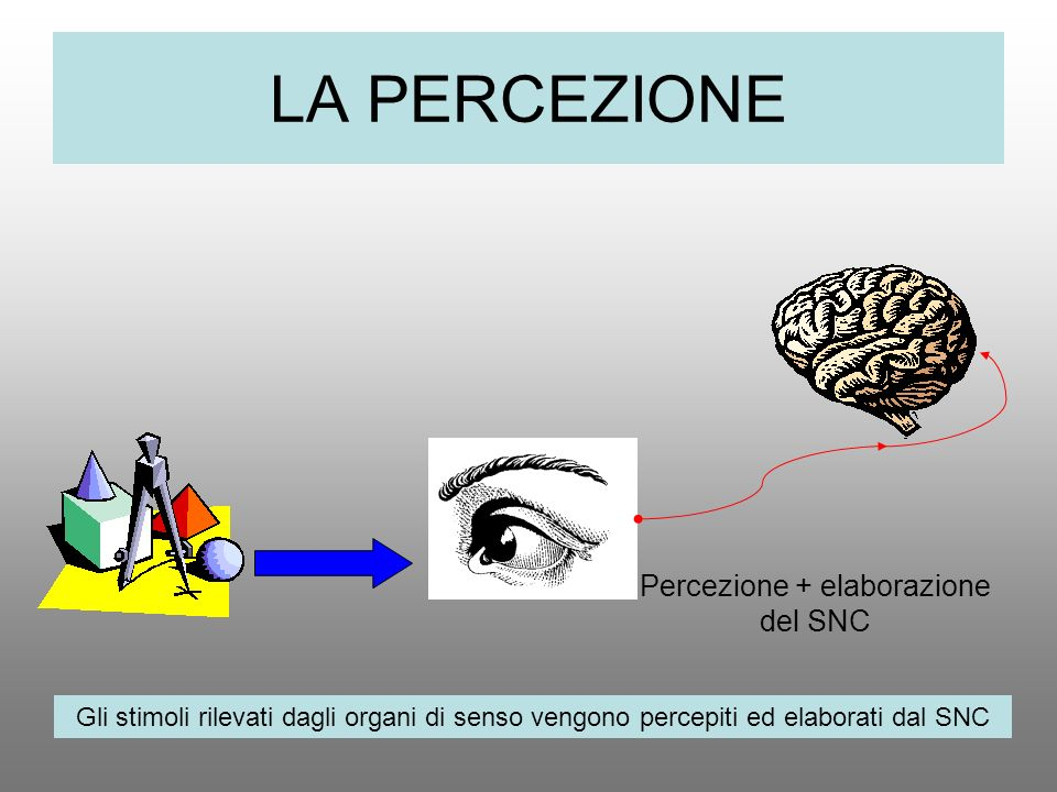 Percezione + elaborazione del SNC