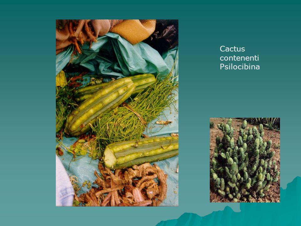 Cactus contenenti Psilocibina