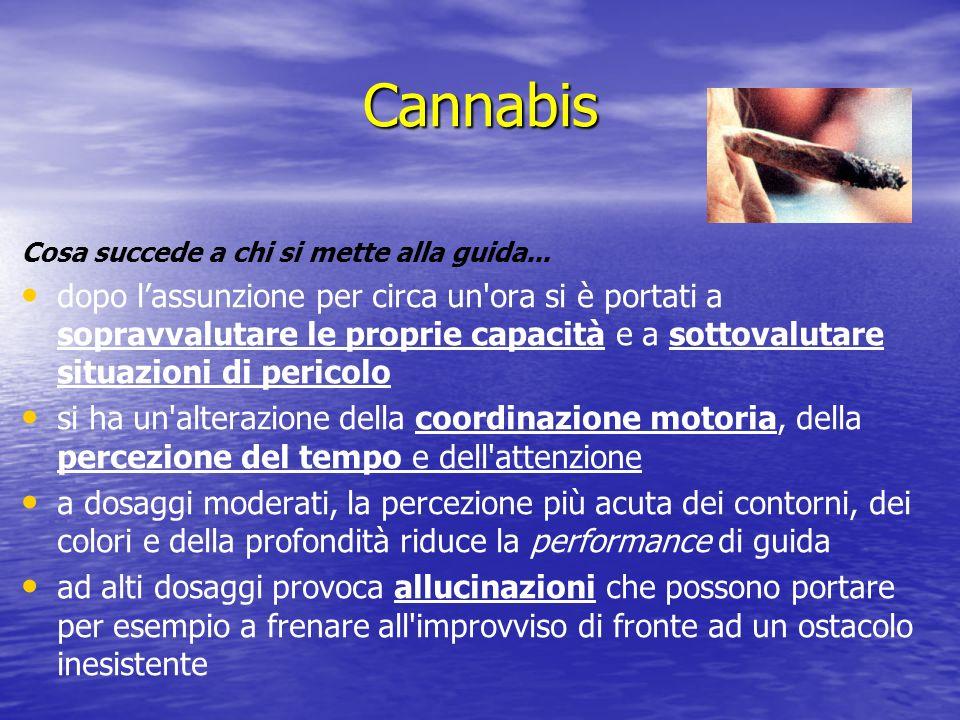 Cannabis Cosa succede a chi si mette alla guida...