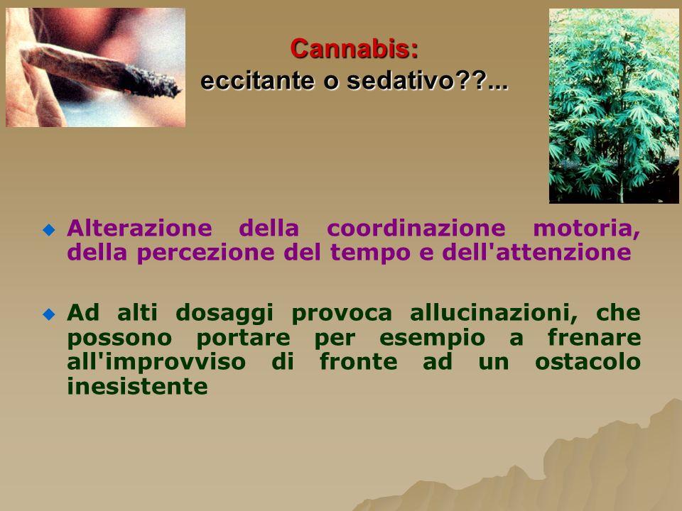 Cannabis: eccitante o sedativo ...