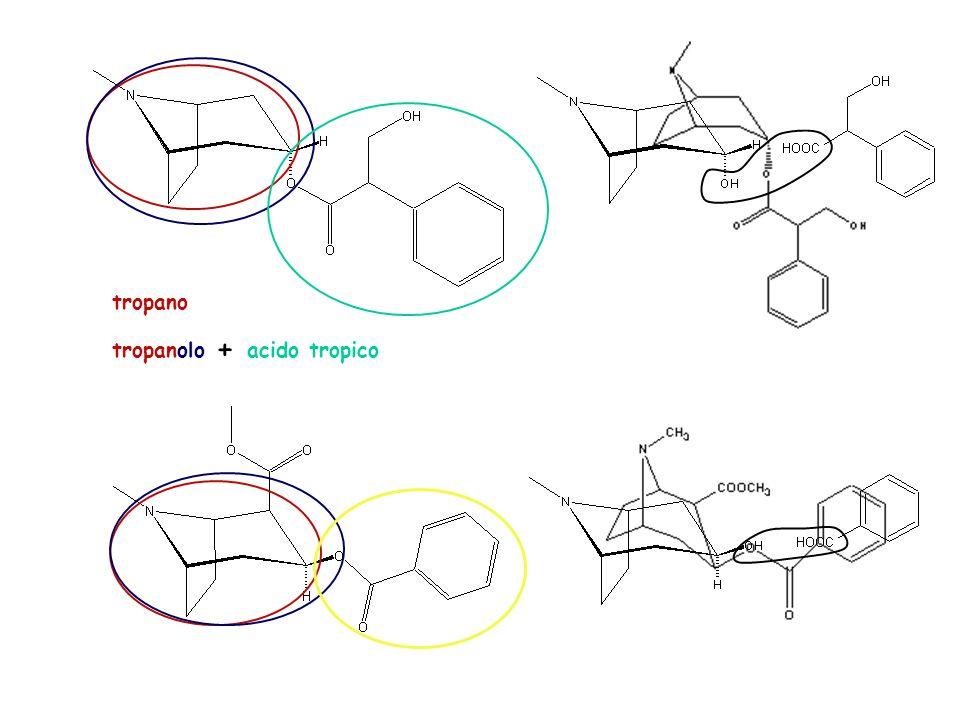 tropano + tropanolo acido tropico