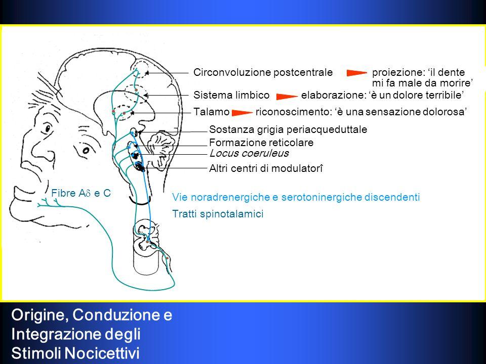 Origine, Conduzione e Integrazione degli Stimoli Nocicettivi