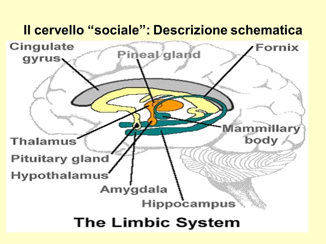 Il cervello sociale : Descrizione schematica