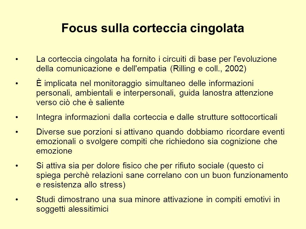 Focus sulla corteccia cingolata
