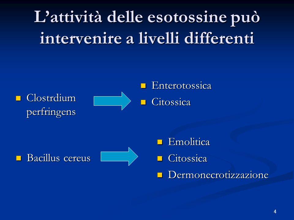 L'attività delle esotossine può intervenire a livelli differenti