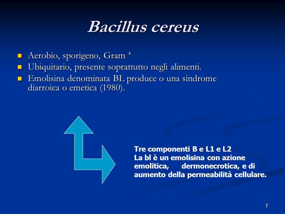 Bacillus cereus Aerobio, sporigeno, Gram +