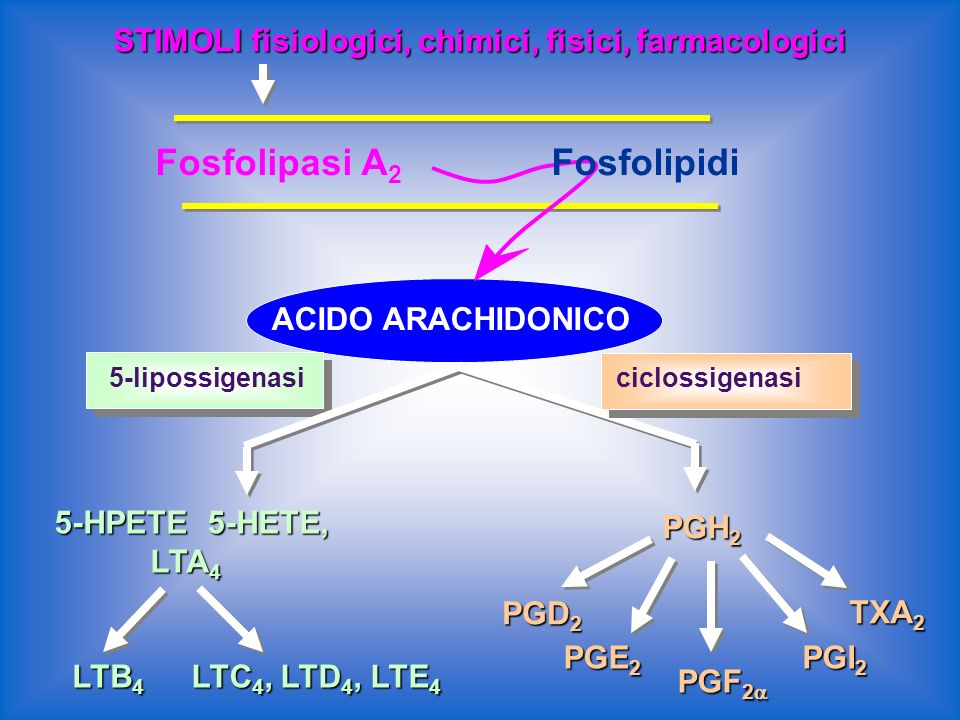 Fosfolipasi A2 Fosfolipasi A2 Fosfolipidi
