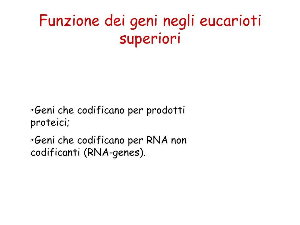 Funzione dei geni negli eucarioti superiori