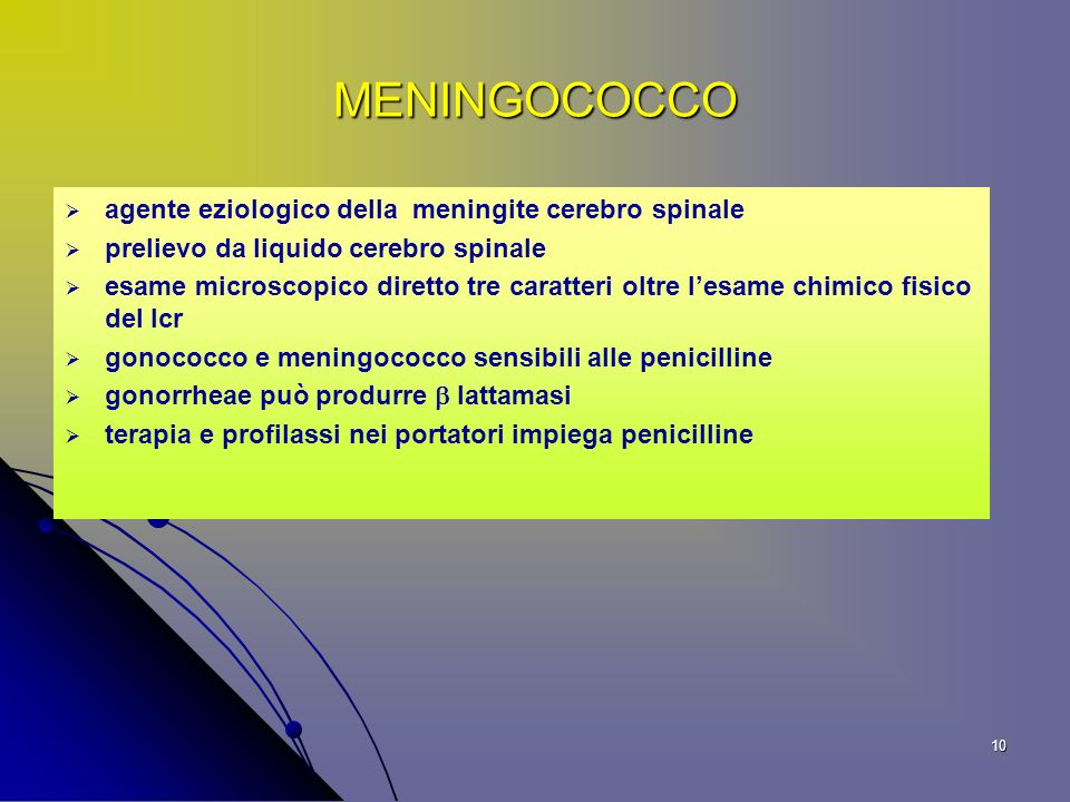 MENINGOCOCCO agente eziologico della meningite cerebro spinale